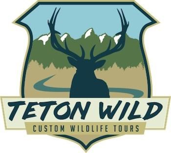 Teton Wild – Webcam Sponsor