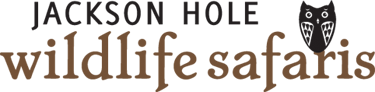 Jackson Hole Wildlife Safaris – Webcam Sponsor